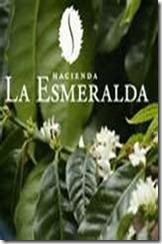 Hacienda La Esmeralda, Boquete, Panama_thumb