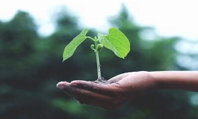 Importance of Social Responsibility in Business