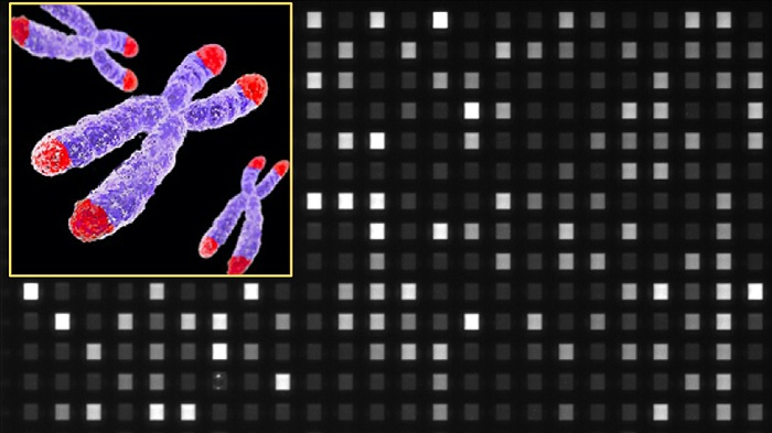 New system to profile telomeres in less than 3 hours
