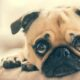 Here's How Can CBD oil Benefit Dogs & Other Pets