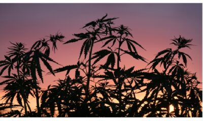 The Heroic World History of Hemp