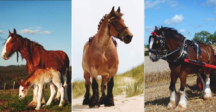 Top 10  Work Horses to Help You on the Farm