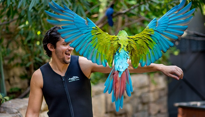 Winging It At Discovery Cove