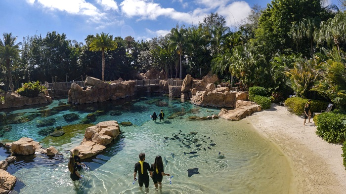 Discovery Cove - Saving a Species