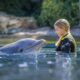 Discovery Cove - Become One Of The Pod